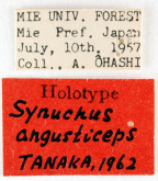 Synuchus (Synuchus) angusticeps Tanaka, 1962: 265
