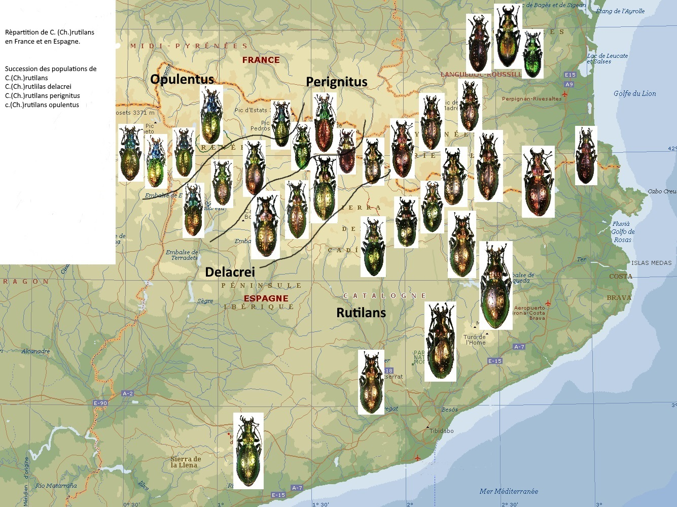 Distribution map of Carabus rutilans complex